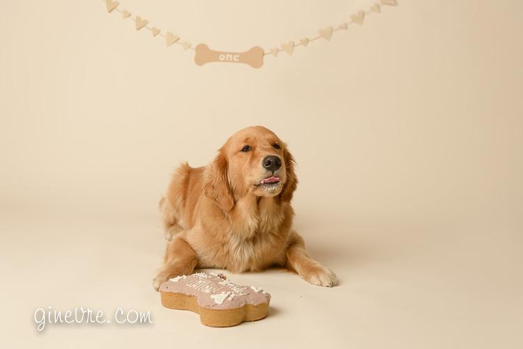dog photographer cochrane calgary cake smash
