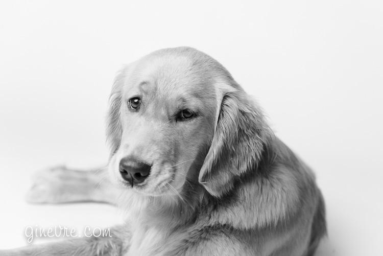 dog_cakesmash_oneyear-19