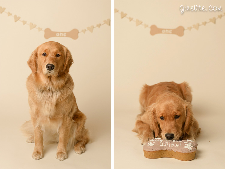 dog photographer cochrane calgary cake smash