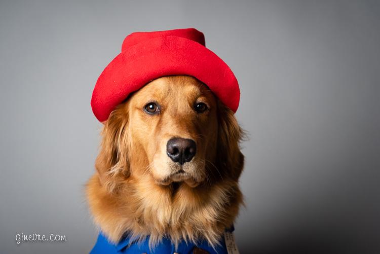 dog_paddingtonbear_halloween_costume_2018-1