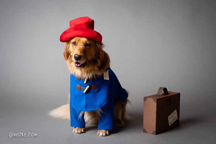 dog_paddingtonbear_halloween_costume_2018-7