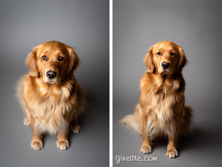 Willow the golden