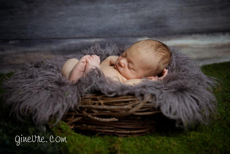 bow valley newborn in nest